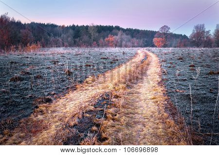 Road in field with faded grass