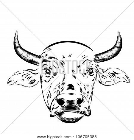 Black and white sketch of a asian cow's face. portrait.