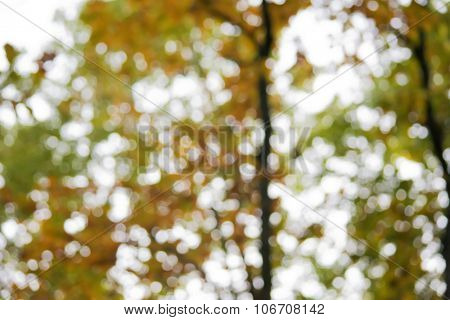 Full frame background of dry yellow autumn leaves