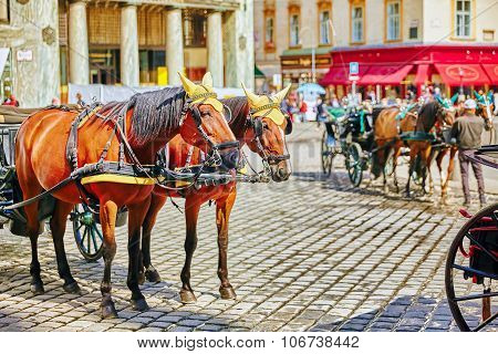 Vienna, Austria- September 10, 2015: Carriage Horses Walking In The Streets Of One Of The Most Beaut