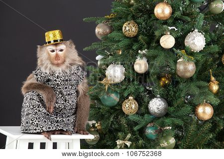 Little Monkey And The New Year's Tree