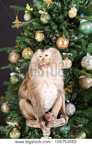 Little Monkey And New Year's Tree