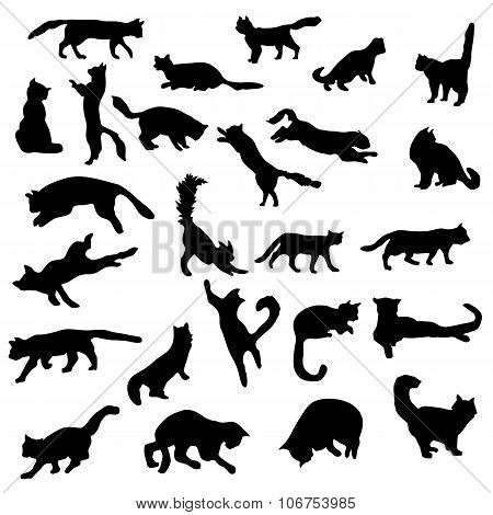 Cats silhouettes set. Cats silhouettes vector. Cats silhouettes illustration. Cats silhouettes collection. Cats icons. Cats icons vector. Cats icons illustration. Cats icons set. Cats icons collection