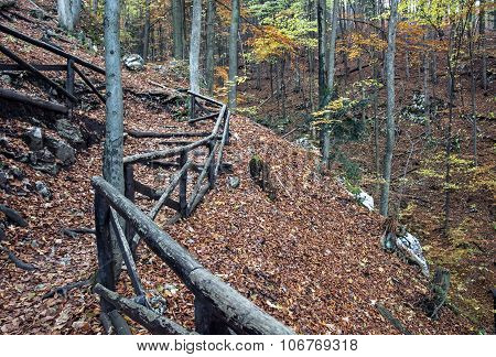Hiking Path In The Autumn Deciduous Forest, Seasonal Natural Scene