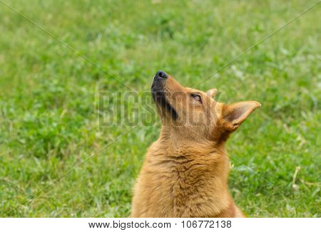 Portrait of cute mixed breed dog looking up