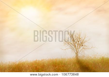 Abstract Nature Background. .made With Color Filters In Soft Color And Soft Focus, Blurred Style.