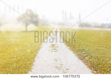 Footpath At Fogy Landscape With Fruit Trees