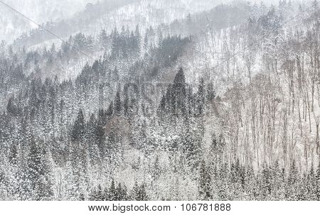 Beautiful Snowfall winter landscape with snow covered trees