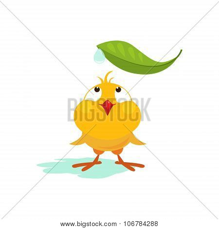 Small Chicken Looking at Leaf. Vector Illustration
