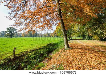 Rural Fall Landscape With Colored Leaves And Green Meadow