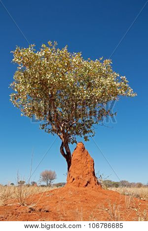Landscape with a tree and termite mound against a blue sky, southern Africa