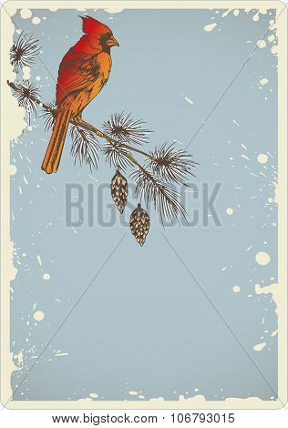 Pine Branch And Cardinal Bird
