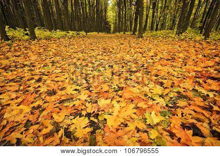 Leaves lying on ground at autumn season