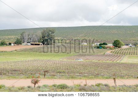 Vineyards Near Lutzville