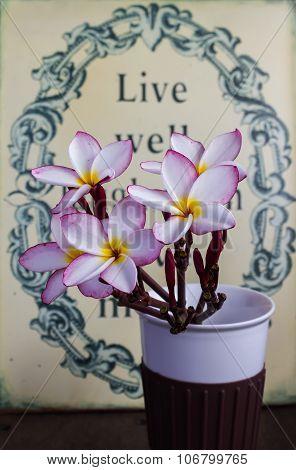 flower plumeria or frangipani in classic cup