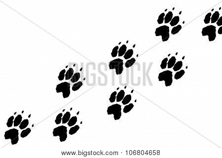 Paws footprints on the white background