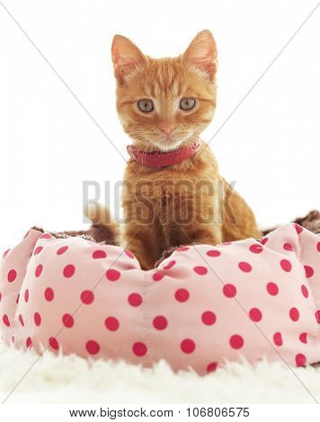 A ginger kitten lying in his soft cozy bed on a white carpet, soft focus, isolated photo.