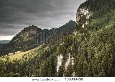The Forest near the Neuschwanstein Castle