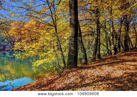 Forest Along Lake In The Autumn, Hdr Image