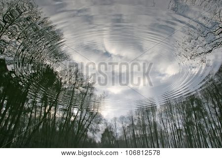 Followed Disperse The Water In Which The Visible Reflection Of The Trees, The Coastal Forest. The Ca