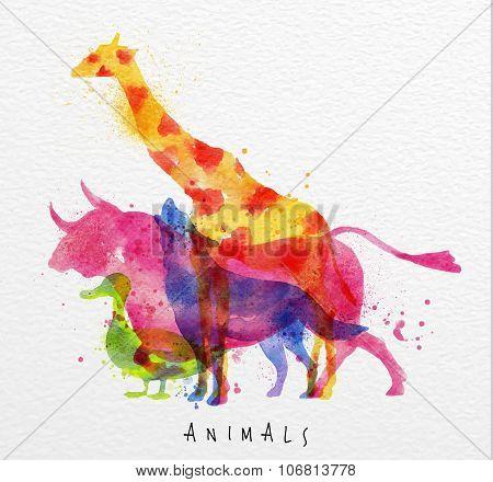 Overprint Animals Bull