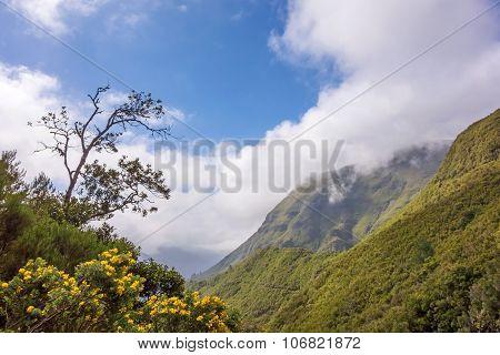 Landscape Near The 25 Fontes Falls, Madeira