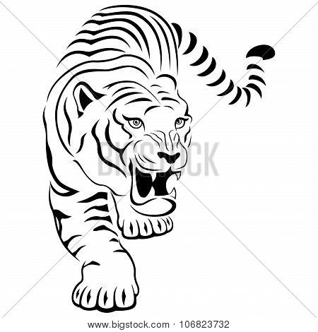Aggressive Tiger On Hunting