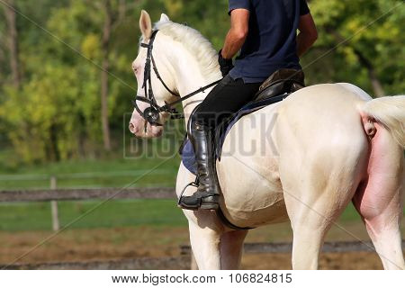 Gray Stallion Galloping With Unknown Rider