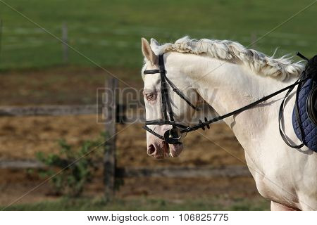 Grey horse canter in summer corral