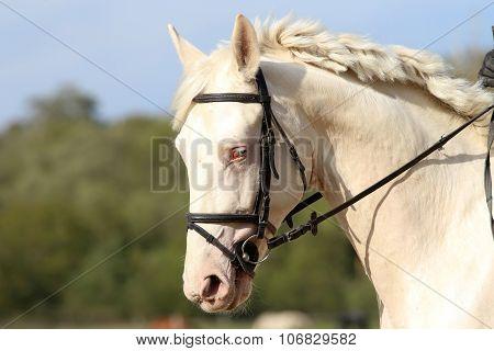 Wonderful White Horse With Unique Blue Eyes