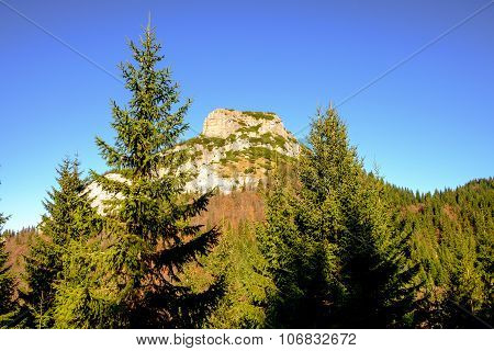 Rocky Mountain Peak With Forest Trees In Foreground