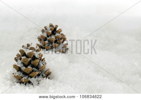 Fir Cones In A Snow Scene
