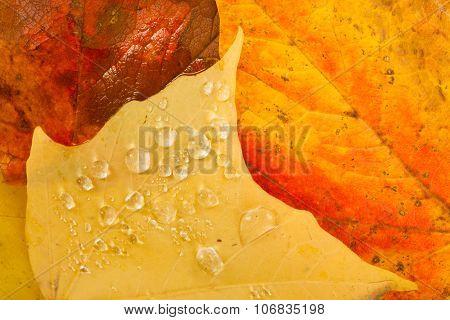 Leaves Fallen Winter Nature Ground Autumn Season Change Dew Drops