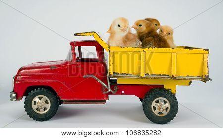 Baby Chicks Newborn Farm Chickens Ride Dump Truck