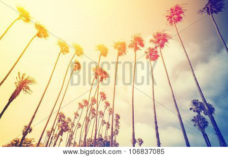 Retro Stylized Palms At Sunset, Santa Monica, Usa.