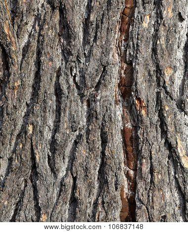 Old Tree Bark Rough Background