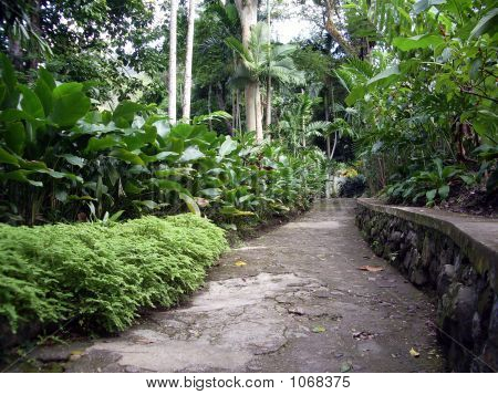 The Jungle Path