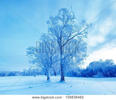 Winter landscape. Cold winter evening