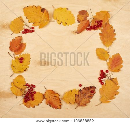 frame from autumn leaves collection and berry on wooden background