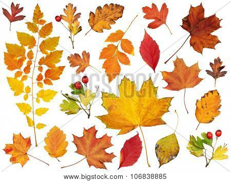 autumn leaves collection, colorful object set isolated on white