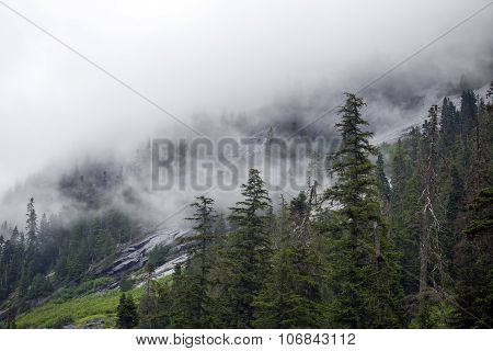 Fog On Alpines