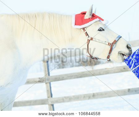 horse with santa hat