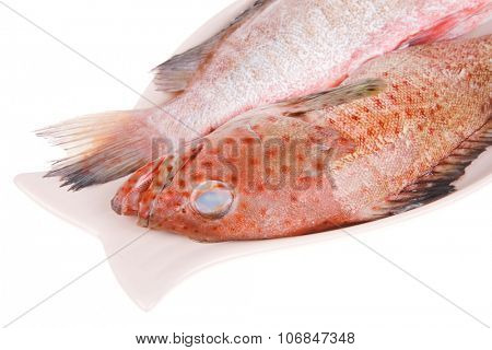 set of fresh raw fish on plate over white background