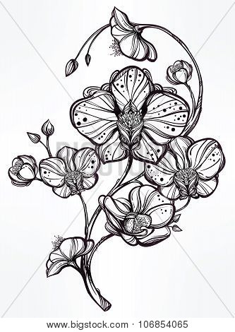 Hand drawn orchid flower illustration.
