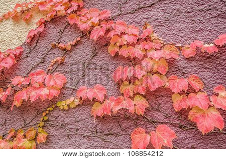 Autumn Leaves Climbing A Wall