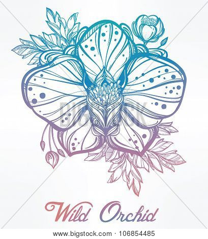 Hand drawn orchid flower illustration.