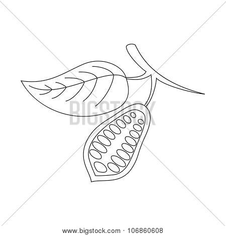 The cacao pod on a white background