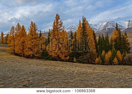Mountains Autumn Snow Forest Larch