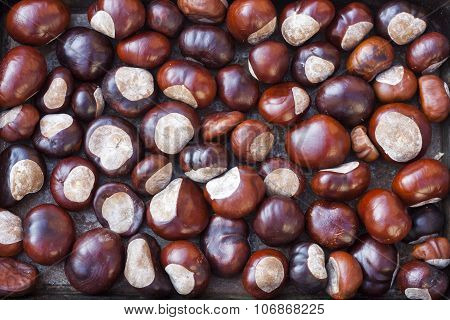 Fall Conkers Background