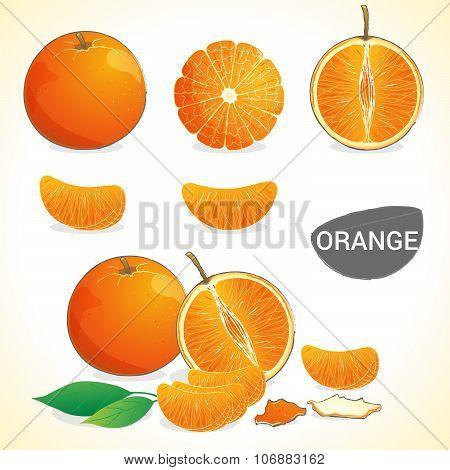Set of orange fruit with leaf in various styles